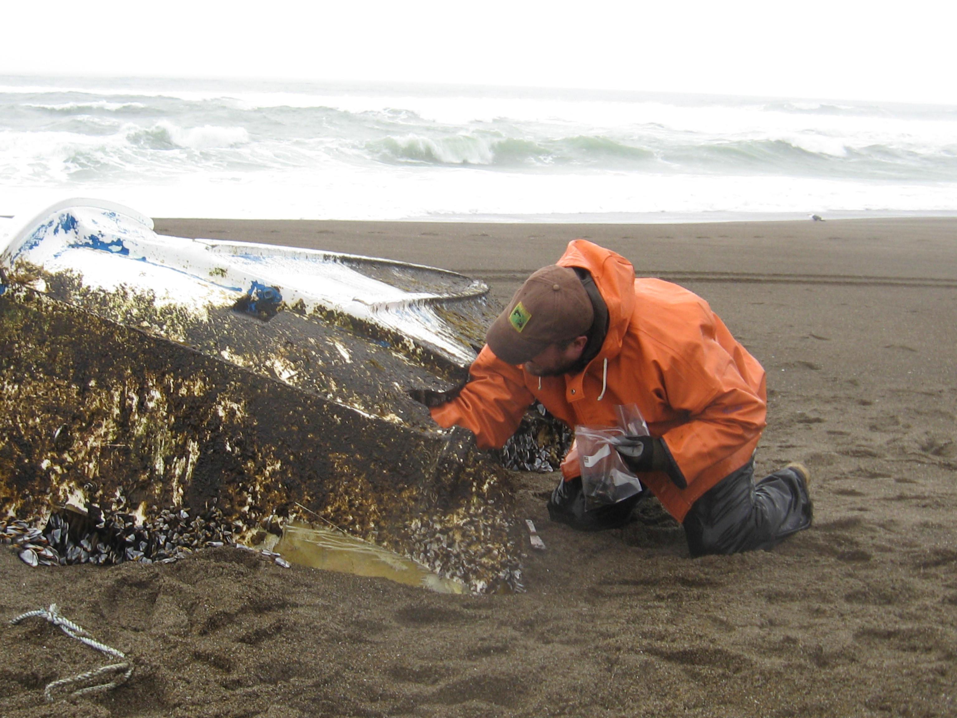 odfw tsunami debris