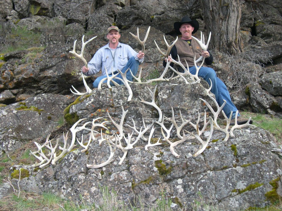 Shed Hunt Responsibly To Protect Big Game
