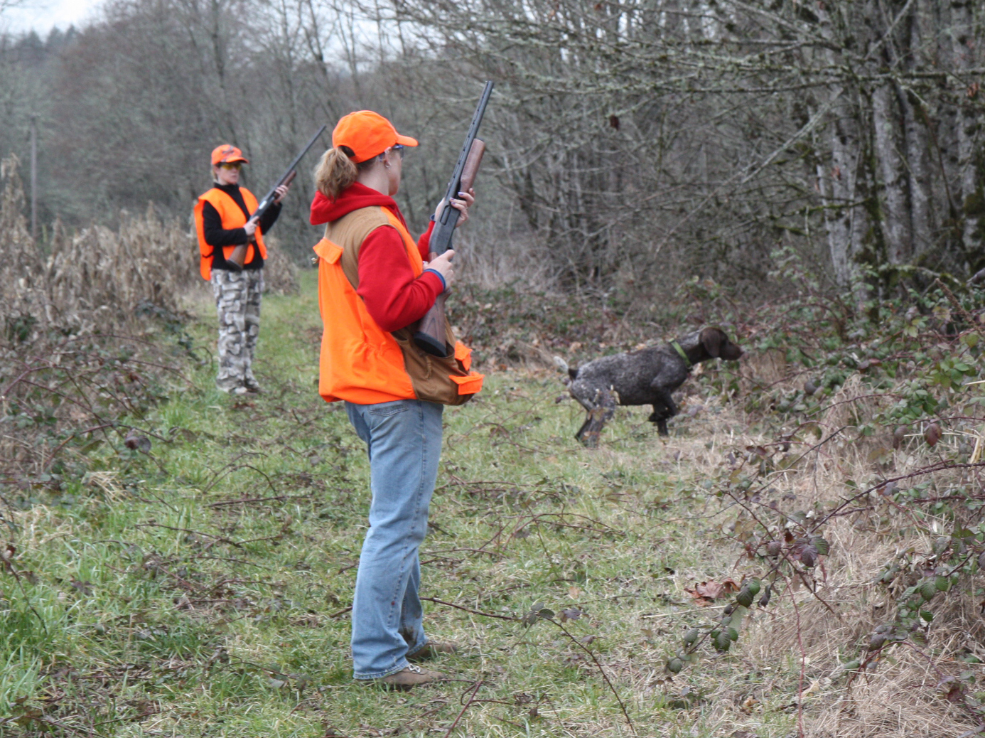 pheasant hunting pictures - HD 1386×1038