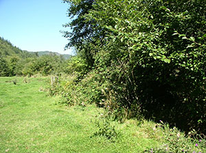 Riparian buggers on Tomlinson Creek