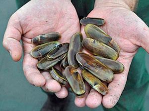 Razor clam closure