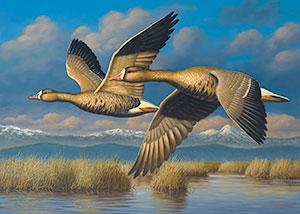 Waterfowl Stamp Art