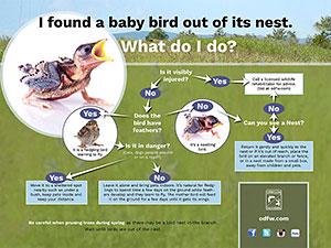 Baby bird flyer