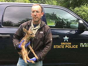 Recovered fawn