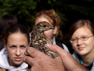 Kids and Spruce Grouse