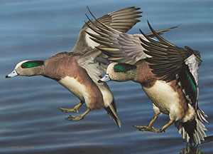 Waterfowl art